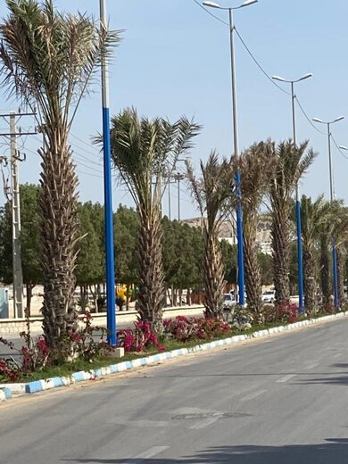 تهیه و کاشت بیش از ۱۰۰۰ بوته گل کاغذی و نهال توت در شهر درگهان