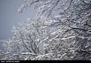 ببینید |  سفیدپوش شدن ارتفاعات دهدز خوزستان در روزهای پایانی زمستان