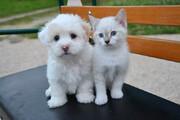 ببینید | دفاع جانانه یک سگ از گربهای بیپناه در مقابل یک سگ عصبانی