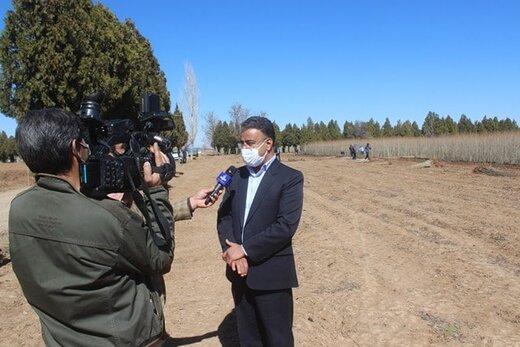 یک میلیون و ۳۰۰ هزار اصله نهال به صورت رایگان در استان مرکزی توزیع می شود