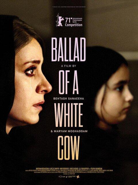 عکس | پوستر بینالمللی فیلم «قصیده گاو سفید»