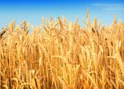 تقویت صندوق بیمه محصولات کشاورزی با اعتبار۳ هزار میلیاردی