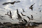 ببینید | پرواز پرندگان بر فراز کارون