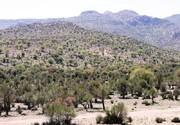 ۴۳ پروژه منابع طبیعی در خراسان جنوبی به بهره برداری میرسد