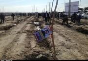 ۱۰ هزار نهال شهری در سطح شهر زنجان غرس میشود