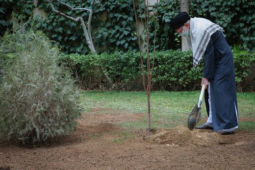 رهبر انقلاب امسال چه درختی کاشتند؟