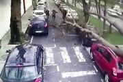 ببینید   لحظه سقوط درخت غولپیکر روی سر عابرین و چند ماشین