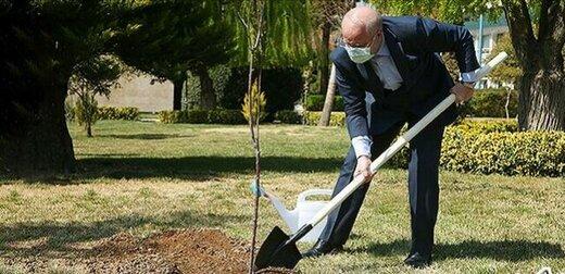 قالیباف در حال درختکاری +عکس