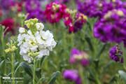 ببینید | به زیبایی گلهای بهاری