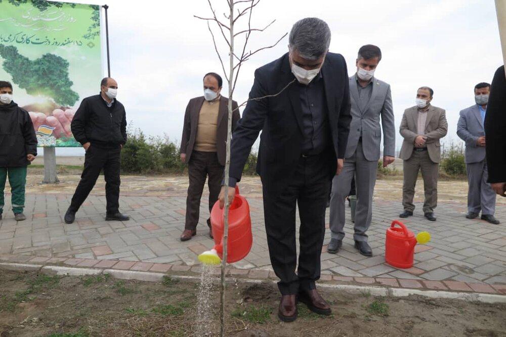 هم زمان با هفته منابع طبیعی و درخت کاری و با حضور سرپرست سازمان منطقه آزاد انزلی تعدادی نهال غرص شد
