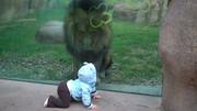 ببینید | تلاش یک شیر برای حمله و شکار یک کودک 10 ماهه