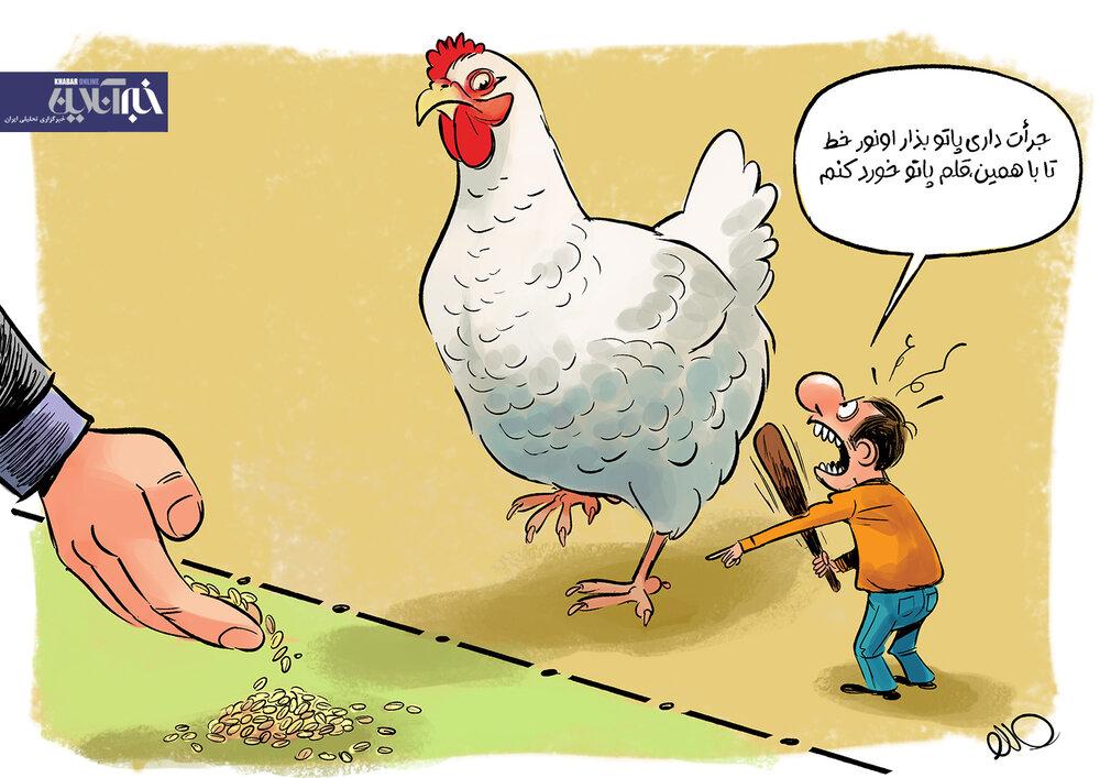 ببینید: مرغ هم ممنوعالخروج شد!