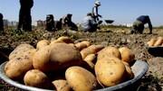 سیب زمینی و پیاز در یک سال چقدر گران شدند؟