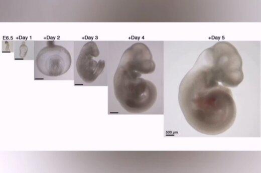 ببینید | انسان در چند قدمی پرورش پستانداران بدون نیاز به مادر!
