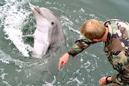 ببینید | آموزش نظامی ملوانان آمریکایی با دلفینهای رزمی