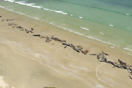 ببینید | خودکشی گروهی دلفین ها