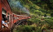 همه آن چیزی که باید درباره سفر به سریلانکا در دوران کرونا بندانید