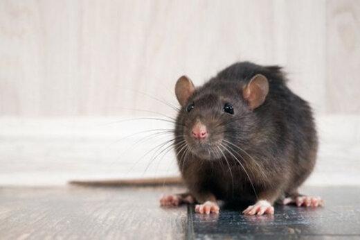 ببینید | حمله موشها به انگلیس