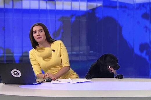 ببینید | ضدحال خوردن کارشناس هواشناسی توسط یک سگ در پخش زنده شبکه تلویزیونی روسیه