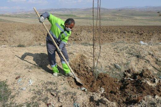 کاشت ۱۰۰۰ اصله نهال جدید در محل دفن زباله ارومیه