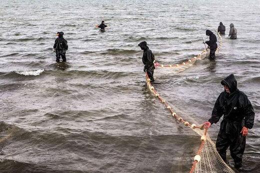 ببینید | صید فیل ماهی ۵۰۰ کیلویی در مازندران