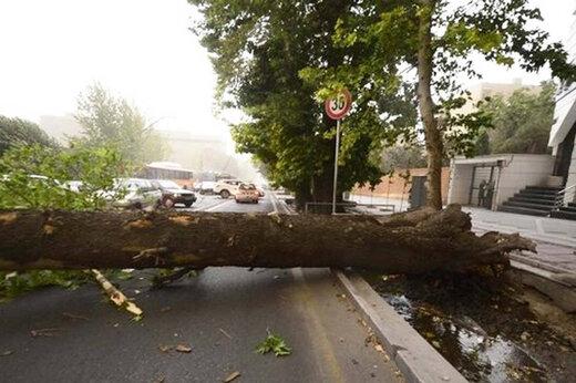 ببینید   سقوط وحشتناک درخت روی خودروها در خیابان ولیعصر