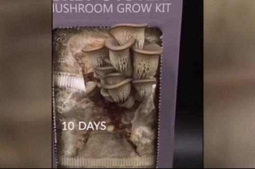 ببینید | رونمایی خیرهکننده از محصولات جدید کشاورزی با قابلیت رشد در منزل