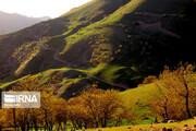 تصاویر   قابهای رویایی از جنگلهای سحرانگیز شهرستان هرسین