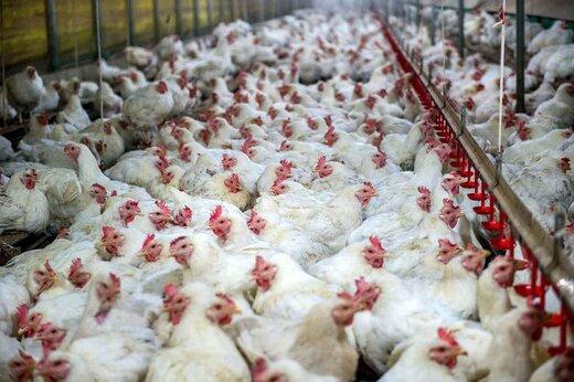 ماجرای هجوم مردم به یک مرغداری در نیکشهر سیستان و بلوچستان چه بود؟