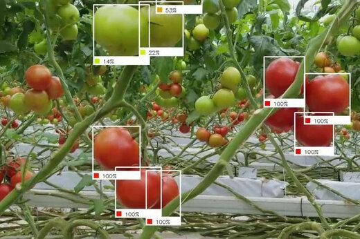 ببینید | آینده صنعت کشاورزی در اختیار هوش مصنوعی و پهپادها