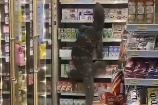 ببینید | حمله مارمولک غول پیکر به یک فروشگاه در تایلند