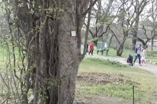 ببینید | نگهداری از درخت بومی جنگلهای ایران در باغ گیاه شناسی وین اتریش
