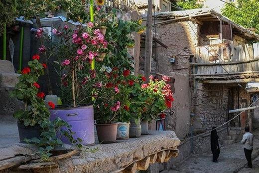 ببینید | خلاقیت خانواده خوشذوق اصفهانی در پرورش گل و گیاه