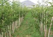 ایجاد ۷۶۰۰ هکتار باغ در اراضی شیب دار لرستان