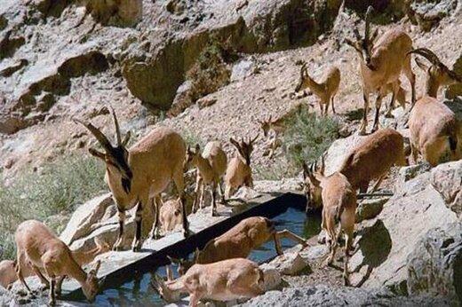 ورود به مناطق حفاظت شده همدان تا پایان خرداد ممنوع است