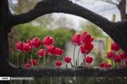 ۱۵ گل زیبا که در شب شکوفا میشوند + تصاویر