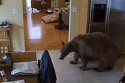 ببینید | سگهای قهرمان؛ مبارزه جانانه با یورش خرس گرسنه به یک خانه