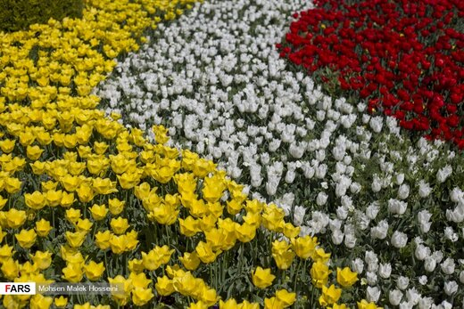 جشنواره گلهای لاله