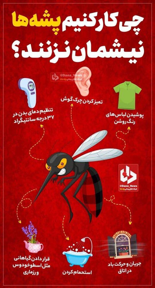 اینفوگرافیک | چه کنیم تا پشهها نیشمان نزنند؟