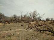 ببینید/جدال طبیعت با معدن سنگ در روستای جزلان/خشک شدن  ۳ هزار درخت