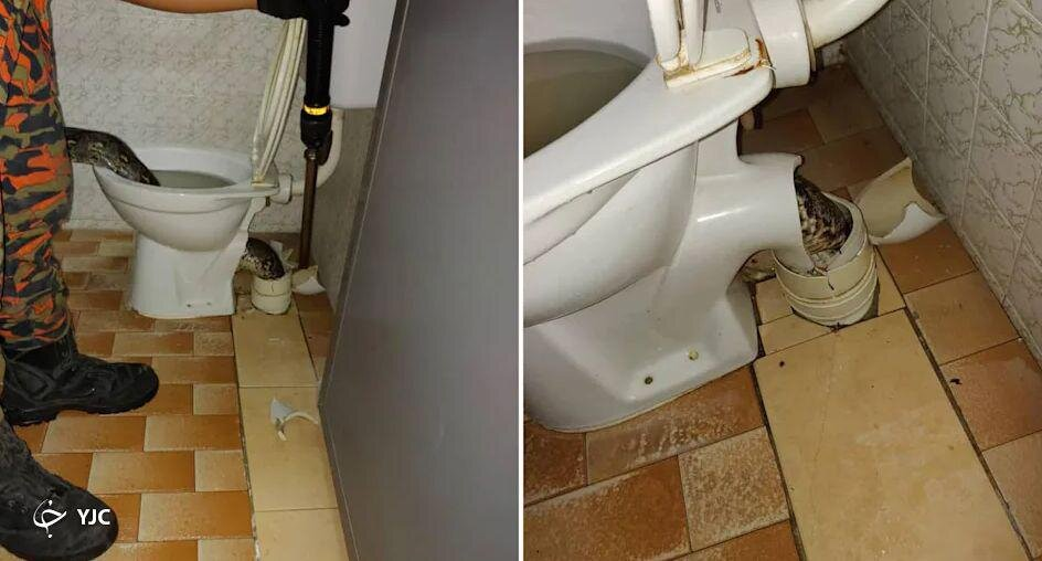عکس | حمله باورنکردنی مار غول پیکر به صاحبخانه در توالت!