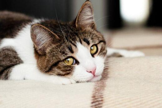 ببینید | واکنش حیرتانگیز یک گربه و محافظت جانانه از چند جوجهها