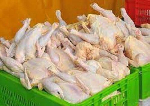 هشدار دامپزشکی کهگیلویه وبویراحمد به واحدهای پرورش مرغ گوشتی استان