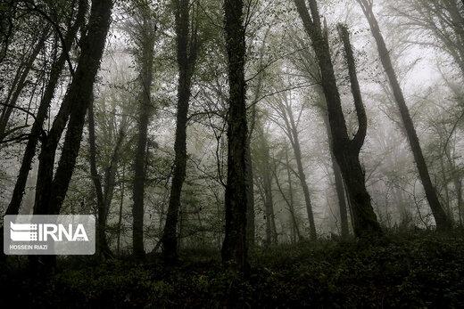 جنگل و دریاچه ارواح