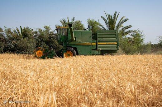 رشد بی سابقه قیمت مواد غذایی در بازارهای جهانی