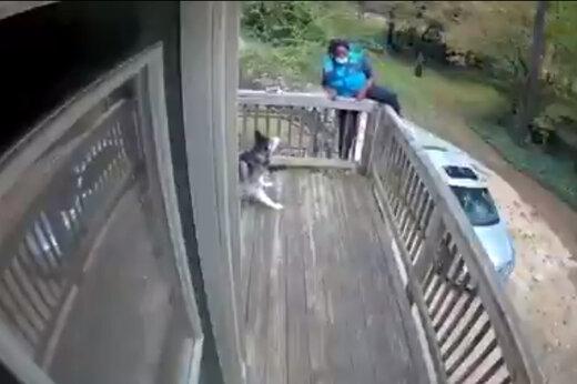 ببینید | وحشت پیک موتوری از یک سگ و واکنش خندهداری که سوژه شد