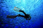ببینید | برگزاری جشن نامزدی در عمق 12 متری زیر اقیانوس