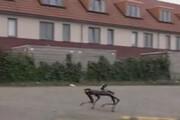 ببینید | بکارگیری ربات موادیاب در هلند