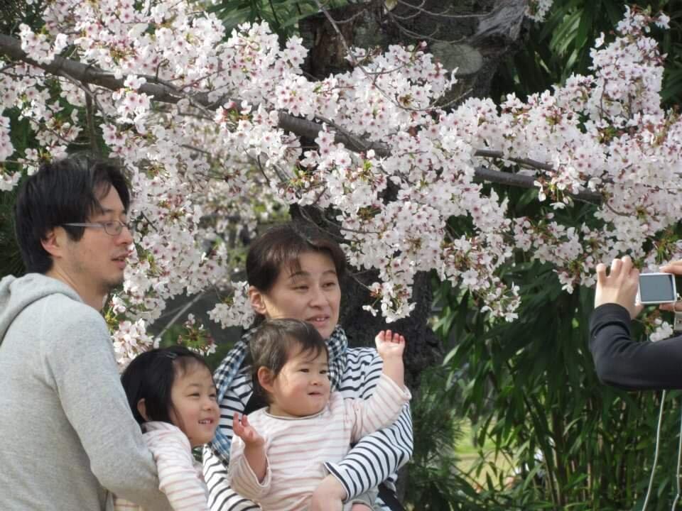«گلگشتِ سعدی» و «هانامی ژاپنی»