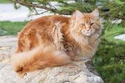 ببینید | گربهای با عجیبترین خصلت و علاقه دنیا!